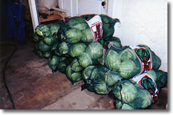 Piles of cabbage